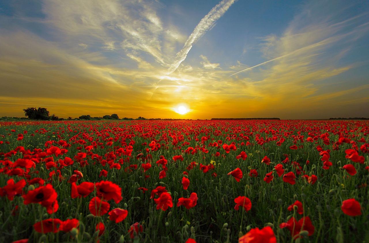 sunset-815270_1280